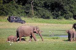Wildlife vakantie in Sri Lanka